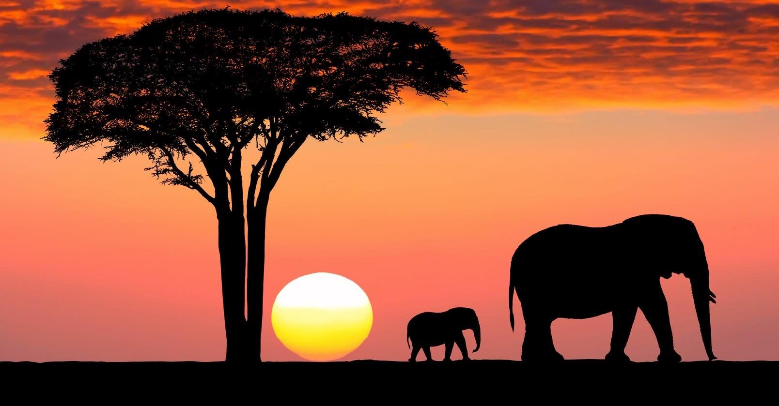 Die Great Migration gehört zu den Tansania Sehenswürdigkeiten schlechthin