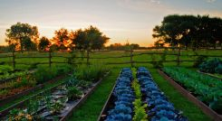 Vegetable garden at La Candelaria del Monte in Buenos Aires Provincia in Argentina