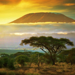 things to do in kenya