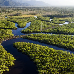 Aerial view of Rainforest, Brazil, South America
