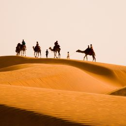 North India travel guide - Camel safari tour in Rajasthan, India.