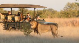 Safari tour at Camp Hwange in Hwange, Zimbabwe