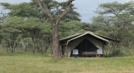 Exterior view of a guest tent at Ndutu Wilderness Tented Camp in Serengeti (South), Tanzania
