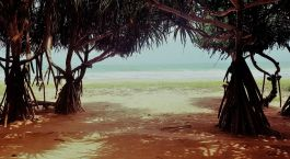 Enchanting Travels - Sri Lanka Tours - Lotus Villa Ayurveda Retreat - Besach