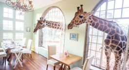 Enchanting Travels - Kenya Tours- Nairobi - Giraffe Manor - dining area