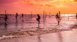 Sri Lanka Stelzenfischer