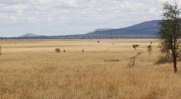 Exterior view at Nieleze Serengeti Camp, Tanzania