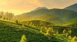 Die Plantagen von Munnar