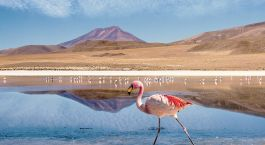 Uyuni Desert - A breathtakingly beautiful natural wonder