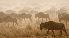 Große Tierwanderung in der Serengeti, Tansania