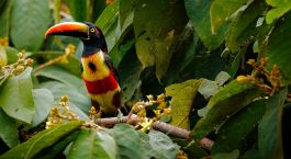 Enchanting Travels Guatemala Tour Birdwatching travel in central America