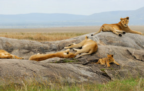 Lioness with cub are resting on the rocks - Kenya: best places to visit in 2019