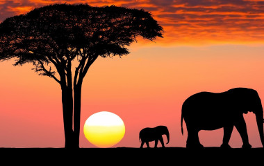 The Great Migration is one of the Tanzania attractions par excellence