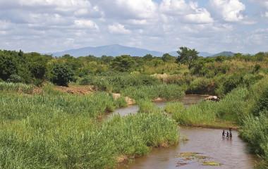 Üppige Vegetation im Liwonde Nationalpark
