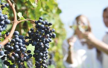 Weinreisen in Chile