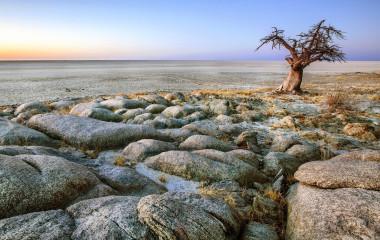 Baobabbaum in steiniger Landschaft in Sambia