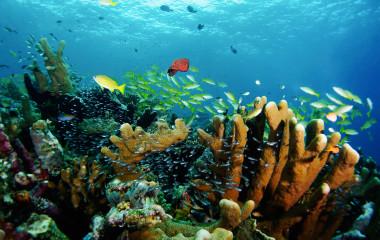 Unterwasseraufnahme von bunten Fischen und Korallen
