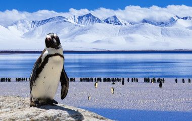 Enchanting Travels Antarctica Reisen Penguin