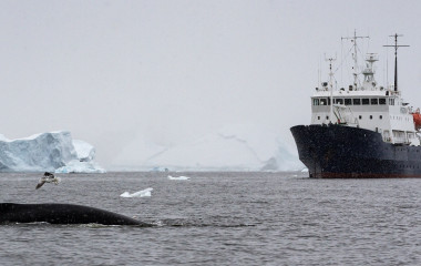 Enchanting Travels Antarctica Tours A humpback whale