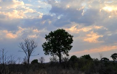 The sunset of Hwange National Park of Zimbabwe