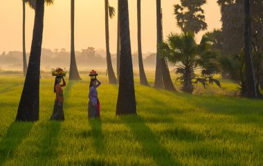 See Rice Paddy - South India Tours