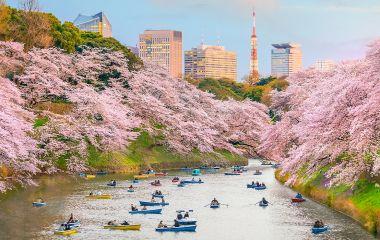Enchanting Travels Japan Tours Chidorigafuchi park in Tokyo during sakura season