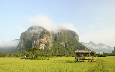 Rice fields, Phonsavan, Laos, Asia