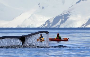 Enchanting Travels Antarctica Tours Humpback- Wal , Antarctica