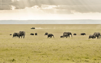 Elephants in the Mara
