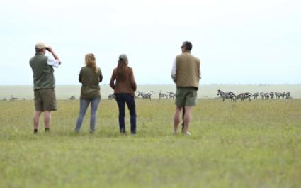 Zebra watching in Laikipia - Ol Pejeta / Solio, Kenya