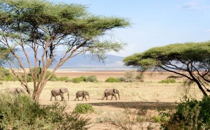 Elefanten im Manyara