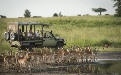Safari-Touristen im Geländewagen beobachten Antilopen an Wasserstelle, Tansania
