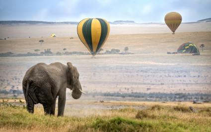 Elefant steht in der Masai Mara von Afrika, während Heißluftballons aufsteigen