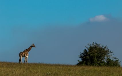 south africa gondwana