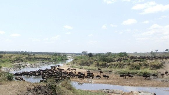 tansania-reisen-northern-serengeti-migration
