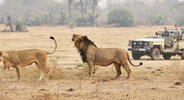 Enchanting Travels African safari parks to see