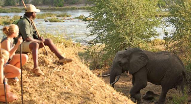 Tanzania safari: North or South?