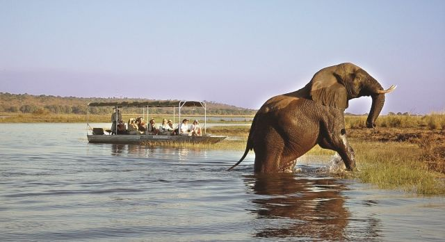 Badender Elefant im Chobe Nationalpark
