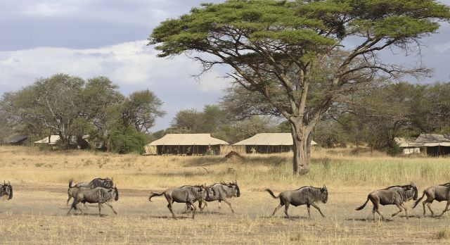Enchanting Travels Tanzania Tours Serengeti Hotels Ubuntu-camp-migration-through-camp