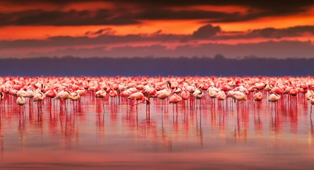 Top 10 Things To Do in Kenya - pink flamingos