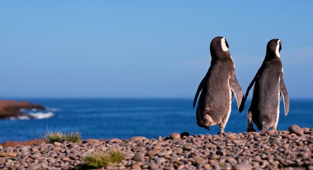 Argentina attractions - penguins