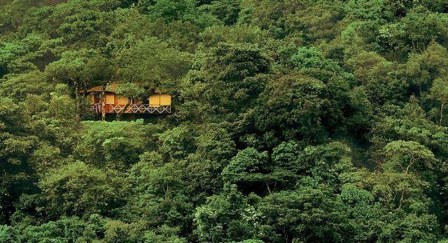 Baumhaus im Wayanad Dschungel