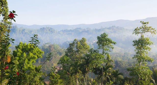 Der Sinharaja Regenwald