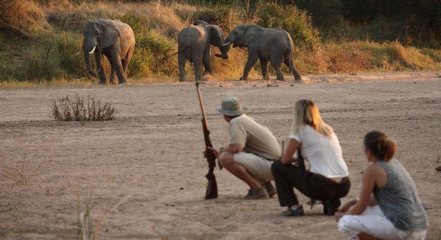 Enchanting Travels - Tanzania Tours - Ruaha Hotel - Jongomero - Get upclose and personal with walking safaris at Ruaha