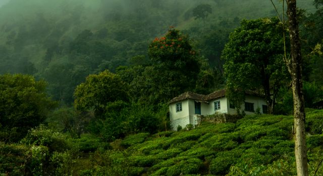 Discover Coorg during your South India vacation