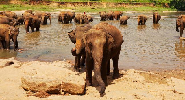 Elephant on Sri Lanka Tours Enchanting Travels - Winter travel
