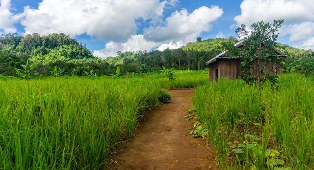 Enchanting Travel Cambodia Tours Mondulkiri Eastern Cambodia Grassy Landscape Mondulkiri