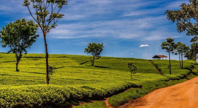 Enchanting Travels Kenya Tours Nandi Hills