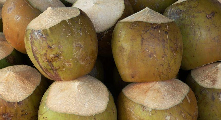 Kokosnuss, Hauptzutat für viele Spezialitäten auf den Seychellen