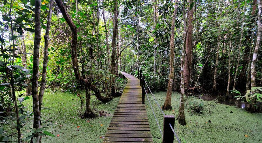Board walk at Abai Jungle Lodge